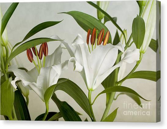 Flower Bouquet Canvas Print - White Lilies by Nailia Schwarz