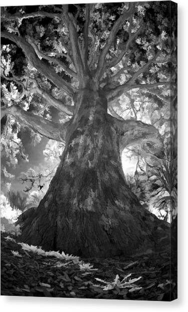 White Oak Canvas Print