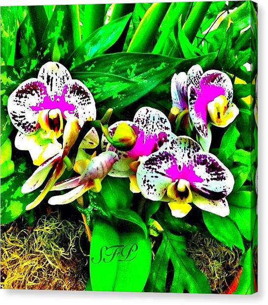 Orchids Canvas Print - White, Purple N Green by Selina P