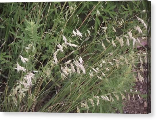 White Reeds Canvas Print