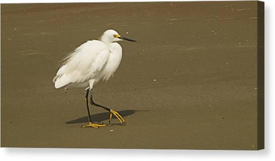White Seabird Walking Canvas Print