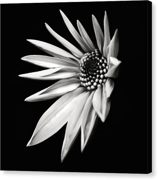 White Star Canvas Print by Jaromir Hron