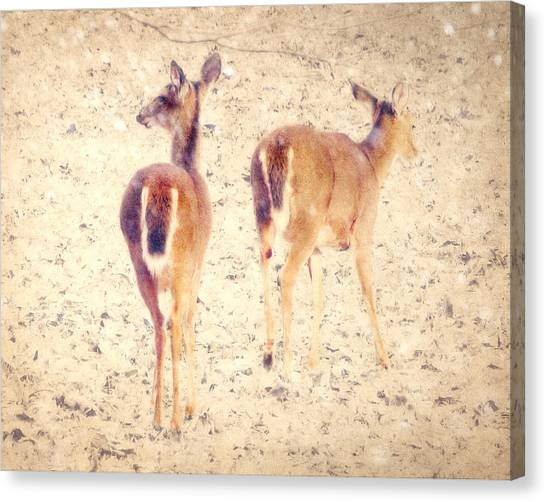 White-tailed Deer Canvas Print - White Tails In The Snow by Amy Tyler