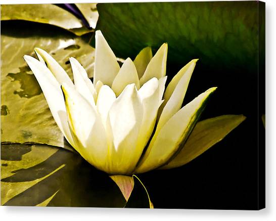 White Water Lily Canvas Print by Design Windmill