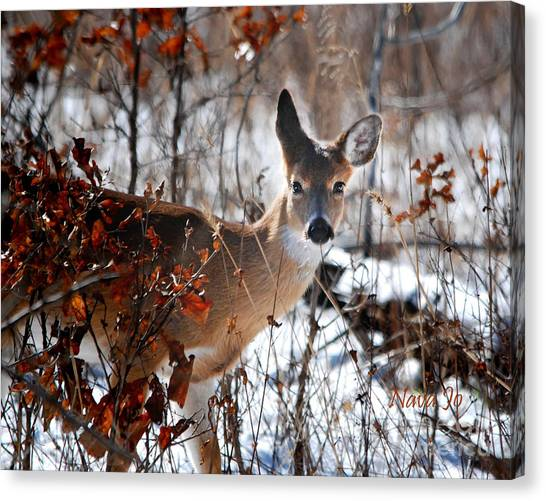 Whitetail Deer In Snow Canvas Print