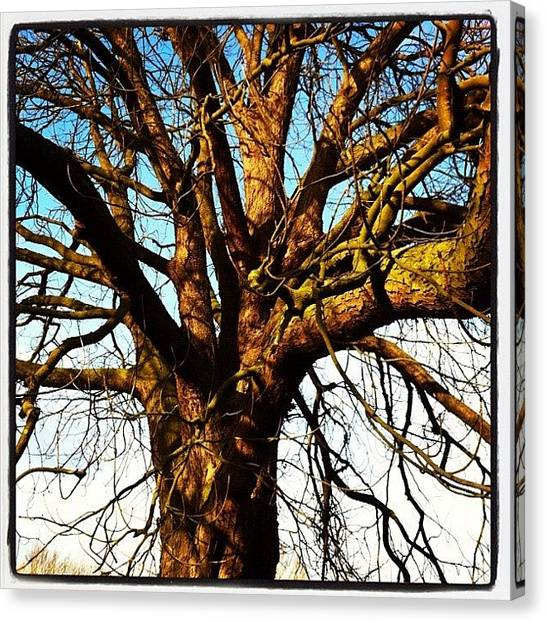 Norfolk Canvas Print - Whitlingham Park, Norwich by Jo Shaw