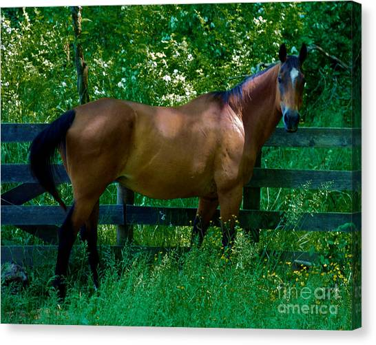 Who You Looking At Canvas Print