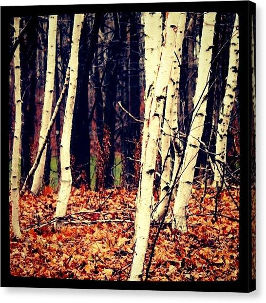 Wisconsin Canvas Print - Wi Woods by Jennifer Augustine