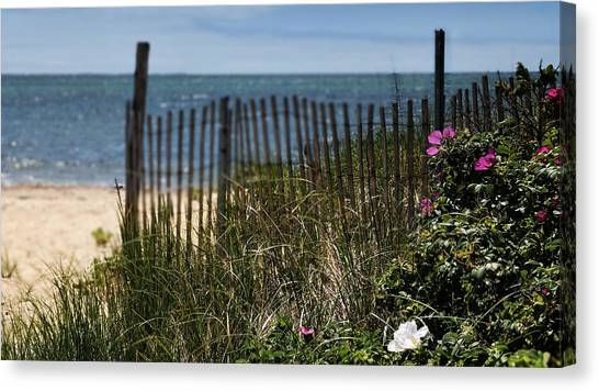 Wild Beach Rose - Cape Cod Canvas Print