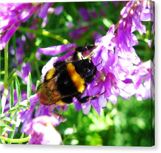 Wild Bee On Flower Canvas Print by Andonis Katanos