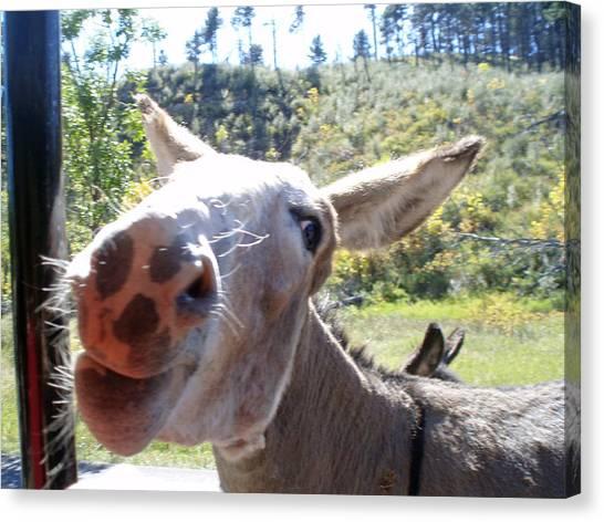 Wild Donkey Canvas Print