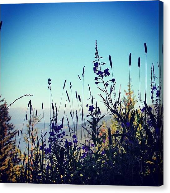 Italy Canvas Print - Wild Flowers by Luisa Azzolini