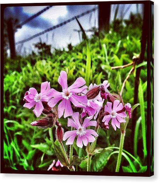 Lavender Canvas Print - Wild Flowers..... They Don't Look Very by Robert Campbell