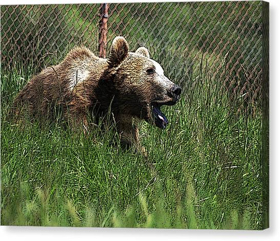 Wild Life Safari Bear Canvas Print