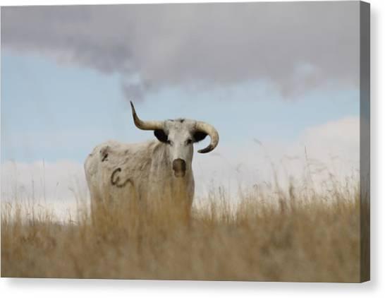 Wild Longhorn Canvas Print