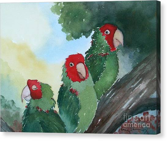 Wild Parrots Of Telegraph Hill Canvas Print