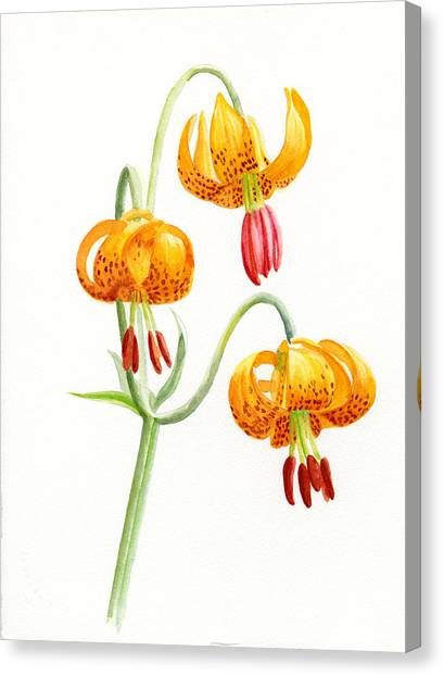 Wild Tiger Lilies Canvas Print by Sharon Freeman