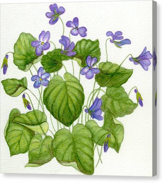Wild Violets Canvas Print by Becky Yates