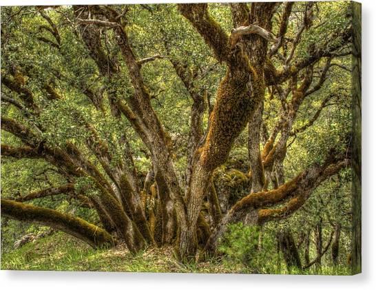 Wild Wood Canvas Print by Ren Alber