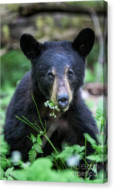 Wildflower Bear Canvas Print