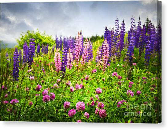 Clover Canvas Print - Wildflowers In Newfoundland by Elena Elisseeva