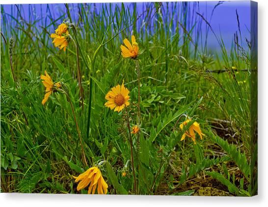 Wildflowers Canvas Print by Jen TenBarge