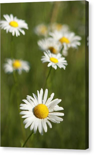 Wildflowers Canvas Print by Kathryn Mayhue