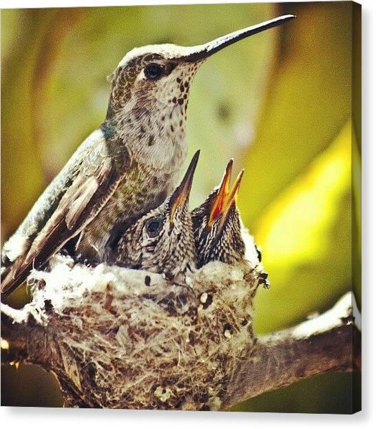 Hummingbirds Canvas Print - #wildlife #photography #hummingbird by Michael Amos