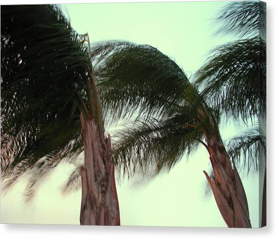Wind Blown Canvas Print by T Guy Spencer