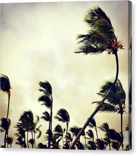 Hurricanes Canvas Print - #wind #hurricane #trees #sky #palmtrees by Bex C