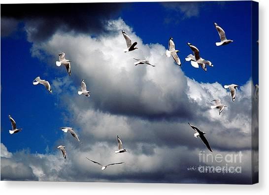 Canvas Print featuring the photograph Wind Sailing Seagulls by Vicki Ferrari