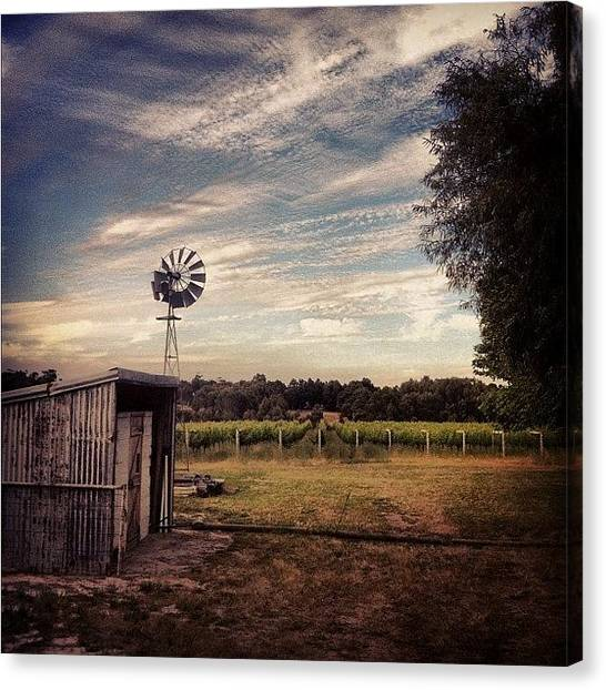 Vineyard Canvas Print - #windmill #shed #winery #scenery by Glen Offereins