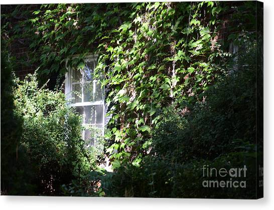 Window And Vines Canvas Print