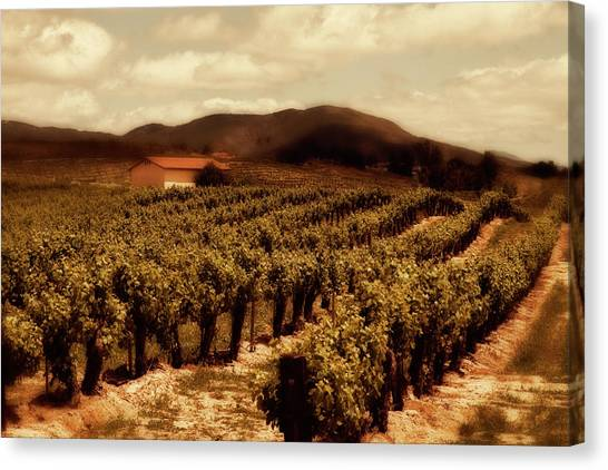 California Canvas Print - Wine Country by Peter Tellone
