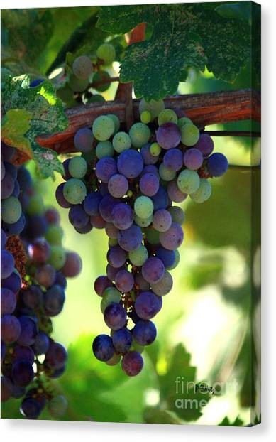 Wine To Be Canvas Print