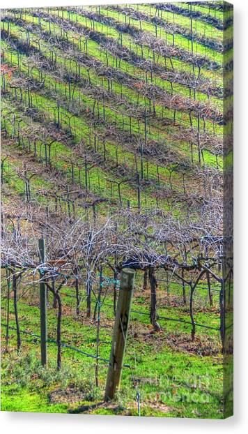Winery Canvas Print by Kelly Wade