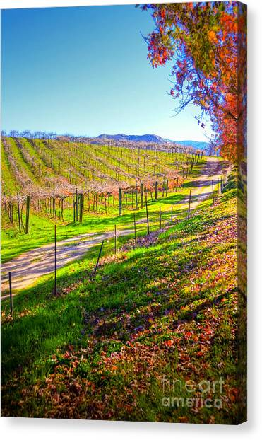 Winery Road Canvas Print by Kelly Wade