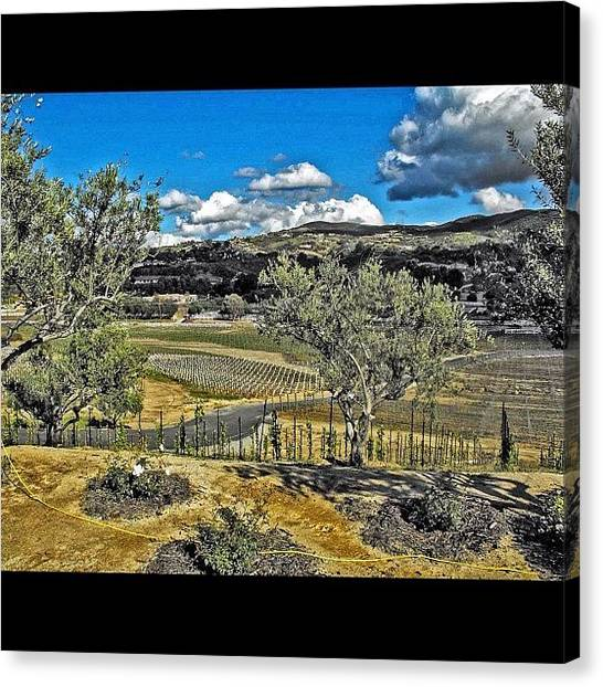 Winery Canvas Print - #winery #temecula #photographer #image by Skip Jensen