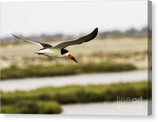 Wings  Canvas Print by Edward Lee