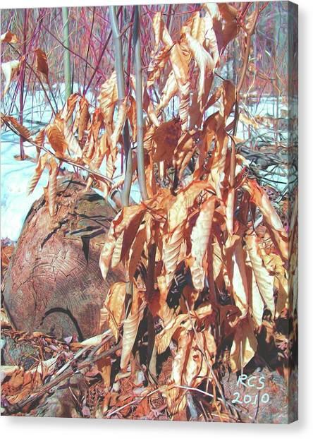 Winter Beech Canvas Print