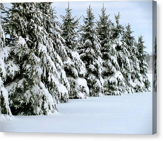 Winter Elegance Canvas Print