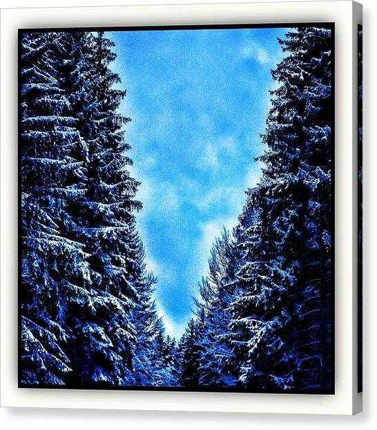 Forests Canvas Print - Winter Forest by Paul Cutright