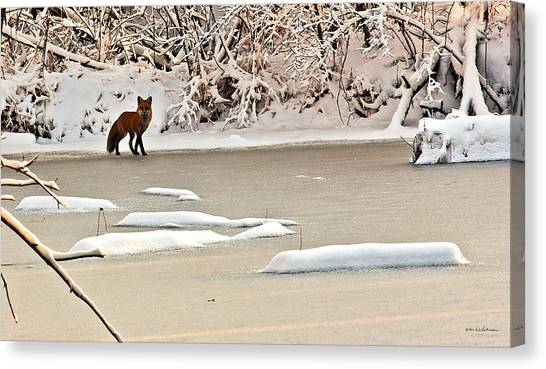 Canvas Print featuring the photograph Winter Fox by Edward Peterson