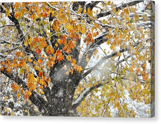 Winter Autumn Collide Canvas Print by JAMART Photography