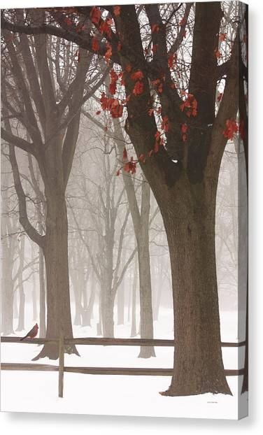 Winter In The Woods Canvas Print by Tom York Images