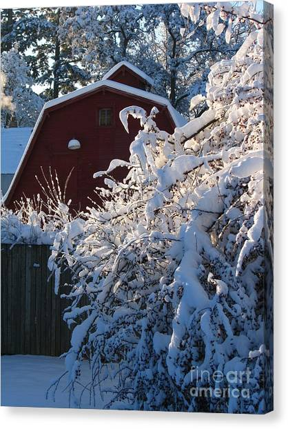 Winter Look Canvas Print by Greg Patzer