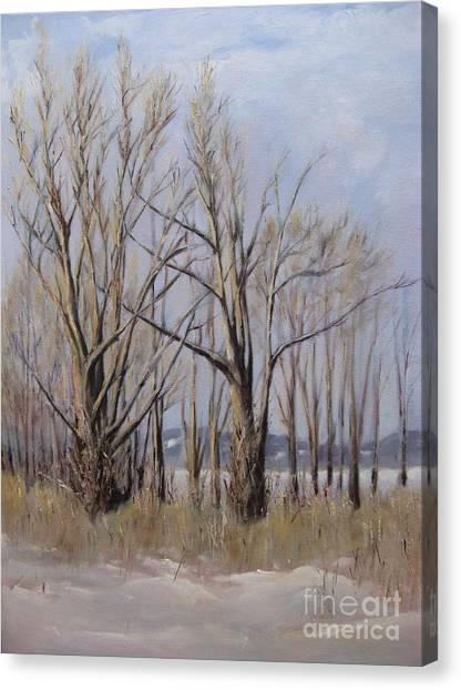 Winter Maples Canvas Print
