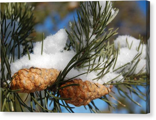 Winter Pine Cones Canvas Print