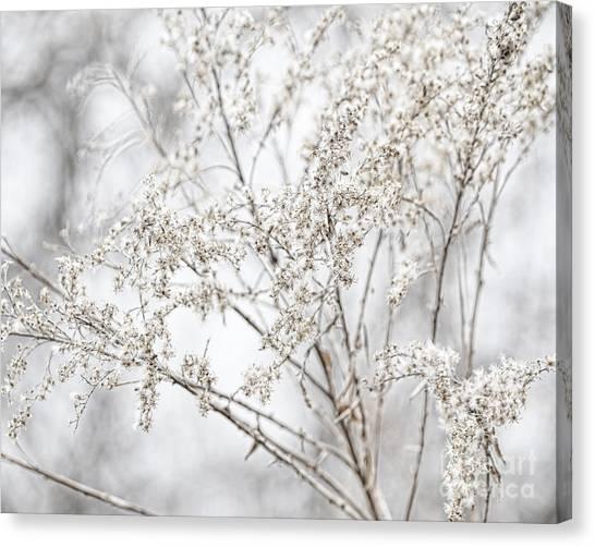 Winter Sight Canvas Print