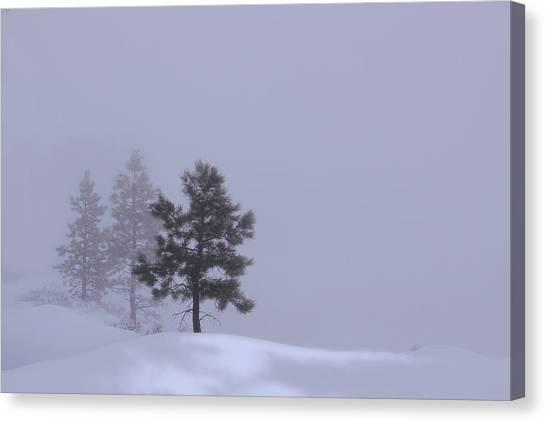 Winter Silence Canvas Print